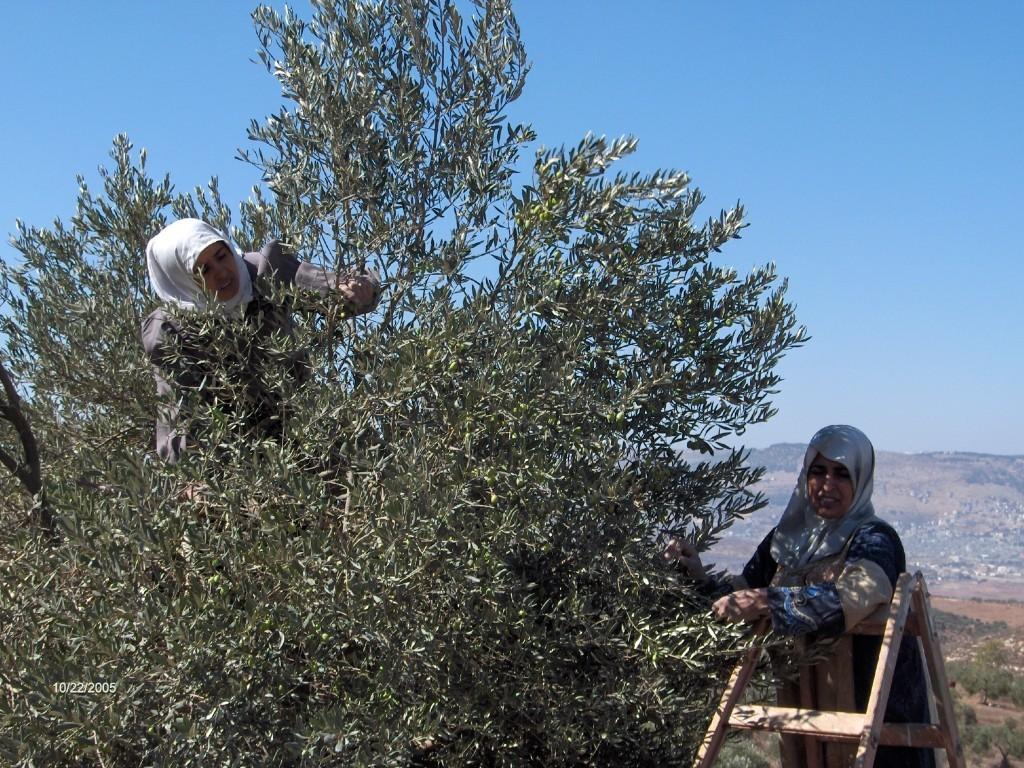 mathilde vermer : dans les oliviers
