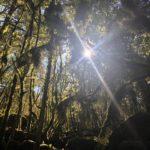 forêt, magie verte, en lien, notre terre, notre force, écologie, prendre des forces, triomphe végétal