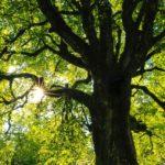 arbre, vertical, horizontal, poésie, mystique, transcendance, beauté, toucher, vivant, émotions, mathilde vermer, chronique